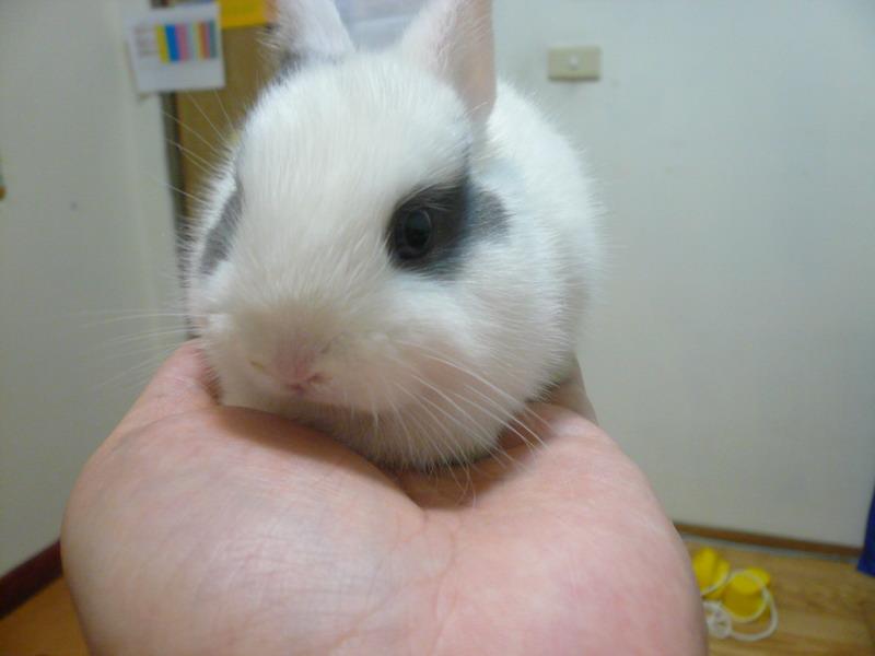 壁纸 动物 兔子 800_600